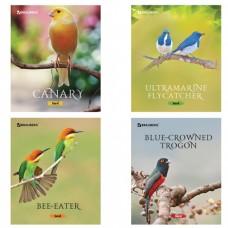 """Тетрадь 48 л. BRAUBERG """"ЭКО"""", клетка, обложка мелованный картон, """"Красивые птицы"""""""