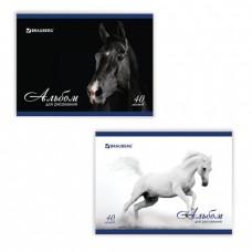 """Альбом для рисования, А4, 40 листов, скоба, обложка картон, BRAUBERG, 200х283 мм, """"Благородные кони"""""""