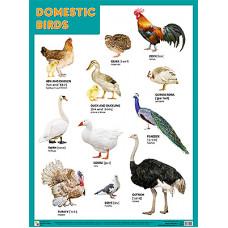 Плакаты (англ). Domestic Birds (Домашние птицы)