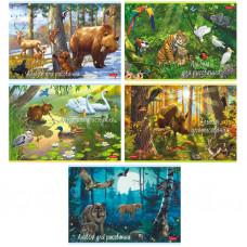 """Альбом для рисования 20л., А4, на скрепке Hatber """"В сказочном лесу"""""""